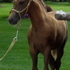 Rocky Mountain Outstanding Chestnut Filly