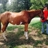 Double registered AQHA & Paint year old mare