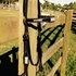 Western Cob or smaller horse blk bling Bridle