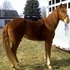 Beautiful Girl!!  Stylish and Flashy Mover...Super Sweet and Gentle!!  Easy to Handle...Easy to Ride...Excellent Breeding!