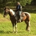 Gorgeous! Great mover! Gelding!