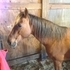 Grade horse needs new home