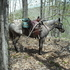 Great Endurance Trail Horse