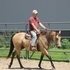 Gorgeous, well-trained AQHA appx. buckskin '03 mare