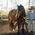 Calm Kid-safe Gelding