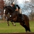 Training Level Eventer - super fun!