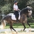 Beautiful athlete shows potential for dressage.