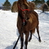 "Rocky Mountain ""Rare Chocolate Creme Filly"""