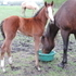 Gorgeous Poco Tivio, Freckles Playboy, Smart Little Lena filly