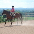 Beginner Safe All Around Thoroughbred Gelding