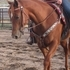 Nice AQHA Two year old Mare