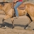 Buckskin QH for trail/mountains