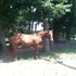 Well Bred, Well Trained Awesome Mare! Reduced