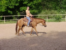 Gorgeous former lesson/youth/amateur show horse