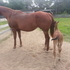 2002 registered mare and foal. INCENTIVE FUND