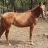 Warmblood filly without breaking the bank