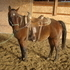 Wellbred 5y/o Gelding Cutting Prospect For Sale
