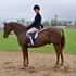 Handsome, Trained 11 Yr. Otter Brook Xenophon Gelding!