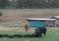 Diverse Sustainable Farm in Central Texas