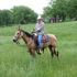 Beautiful Buckskin Trail Horse Mare