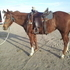 Ranch Horse/Gymkhana Prospect, must go by 6/1