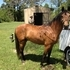 Project Reg. Pasofino For Sale