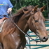 Sailor - Great Trail horse or Show prospect
