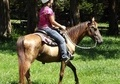 Gente & Slow Gaited - Belonged to a 9yr old Girl
