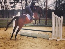 Hunter Jumper (Event prospect) for sale