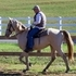Sweet Cream Champagne Well-gaited Gelding