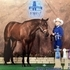 2007 AQHA REGISTERED BAY MARE FOR SALE