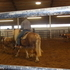 Fun Pony - Versatile-Sound-Broke-Halflinger Mare DOES COWS