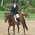 Flashy Small Pony Gelding