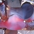 $650.00 Reaining Saddle, Hereford