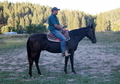 Black  gelding with class- All around prospect !
