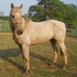 bannana foster great horse for just $850.00