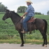 Black Cloud is a big size pony gelding, great on trails