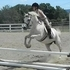 Been there done that beginner safe medium pony gelding