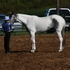 APHA MARE FOR SALE