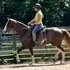 Tennessee Walking Horse Mare