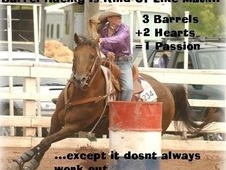 looking for a barrel horse or barrel horse prospect