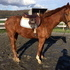 3 Year Old Incentive Fund Appendix Mare