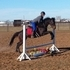 2010 TB gorgeous moving Hunter mare