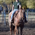 Team Rope, barrels, ranch horse  !!!
