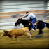 Here is a  Heel horse that Ropers dream about!
