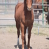 All around, reined cow horse, reining, -potential unlimited !