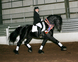 Friesian for sale in United States of America