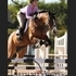 Great All-Around Dutch Warmblood for lease