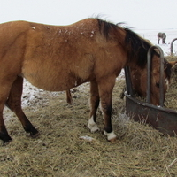 MAKE AN OFFER!!Beautiful Dun Mare