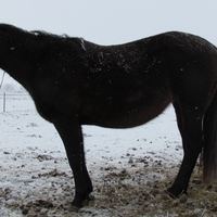 MAKE AN OFFER!!!  Nice Brown (black) Mare